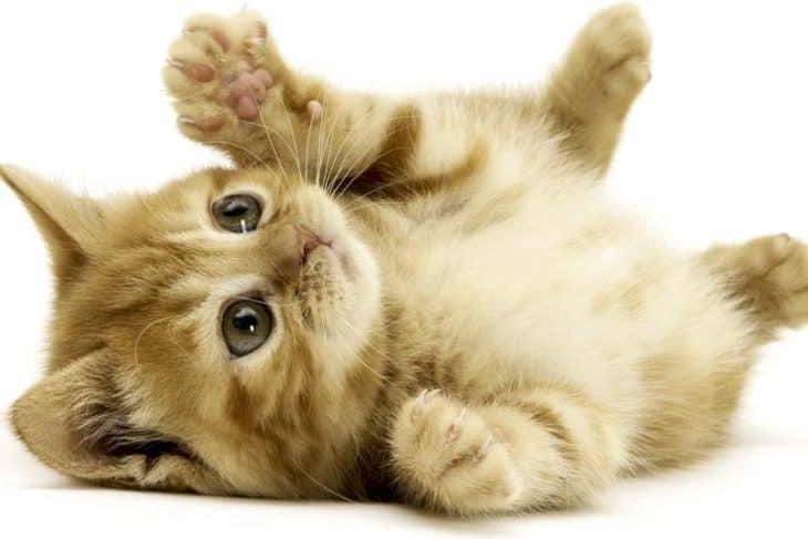 猫っ毛 ワックス