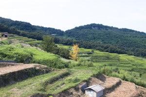 豊島 棚田