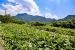 小豆島 観光