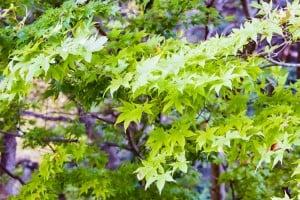 帝釈峡 観光 紅葉 緑