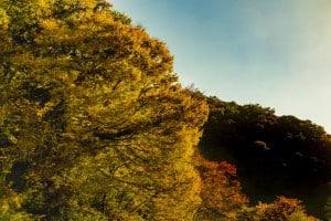 帝釈峡 観光 紅葉01