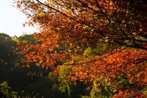 帝釈峡 観光 紅葉