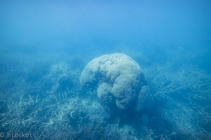ポンツーン 半潜水艇からの景色
