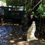 グリーン島 ワニ園