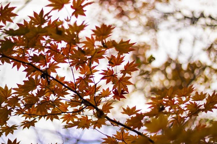 岡山県立森林公園