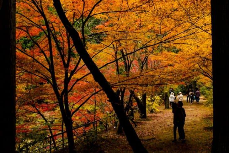 奥津渓 紅葉