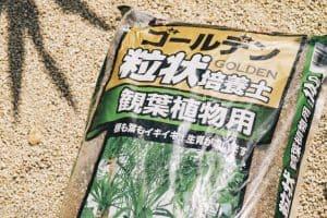 観葉植物 植替え