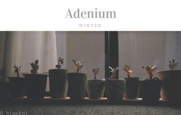アデニウム