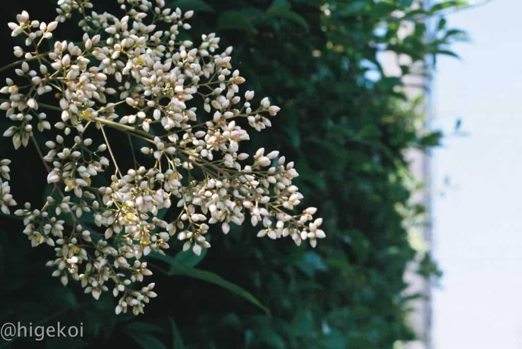 SPF X-TRA400 植物